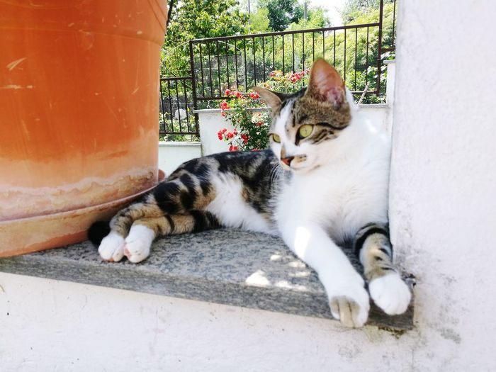My Love Animals Beautiful Relax Summertime Cloe EyeEm Selects Pets Feline Domestic Cat Lying Down Portrait Living Organism Cat Kitten