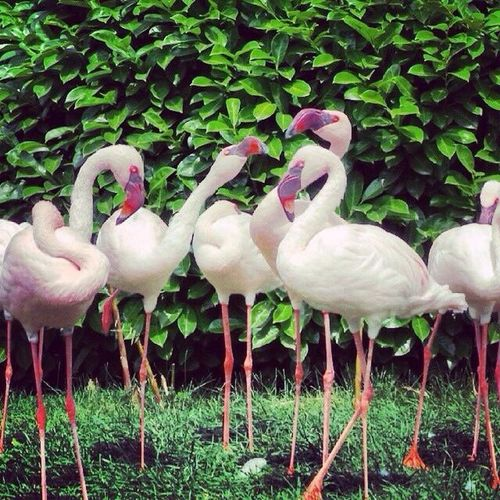 🌸 Bird Animal Themes Animal Vertebrate Group Of Animals Plant Animals In The Wild Animal Wildlife No People Nature Large Group Of Animals Beauty In Nature Outdoors A New Beginning