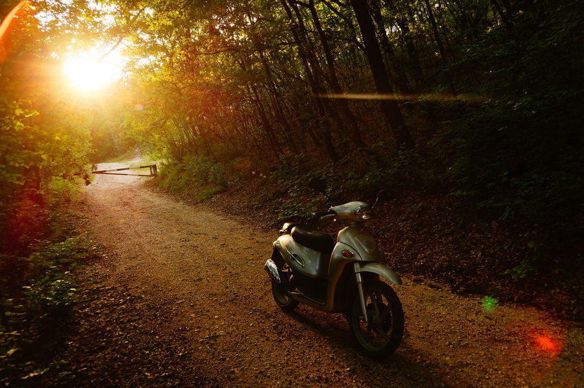 Scooter hiking, relaxed atmosphere Hiking Kymco Relaxing Scooter Day Direction Dirt Road Forest Land Land Vehicle Lens Flare Men Mode Of Transportation Motorcycle Nature One Person Outdoors Riding Road Sunlight Sunset The Way Forward Transportation Travel Tree