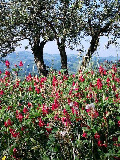 Flower Tree Water Flower Head Red Lake Poppy Summer Sky Landscape