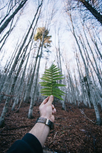 Adult Beauty In Nature Branch christmas tree Close-up Day Fir Tree Forest Holding Human Body Part Human Hand Leaf Lifestyles Nature One Person Outdoors People Pinaceae Pine Tree Plant Real People Spruce Tree Tree Tree Trunk Winter