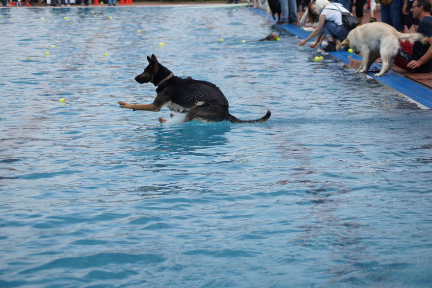 09.2014 Canine Day Dog Lifestyles Mammal Nature Outdoors Pets Rippled Running Water