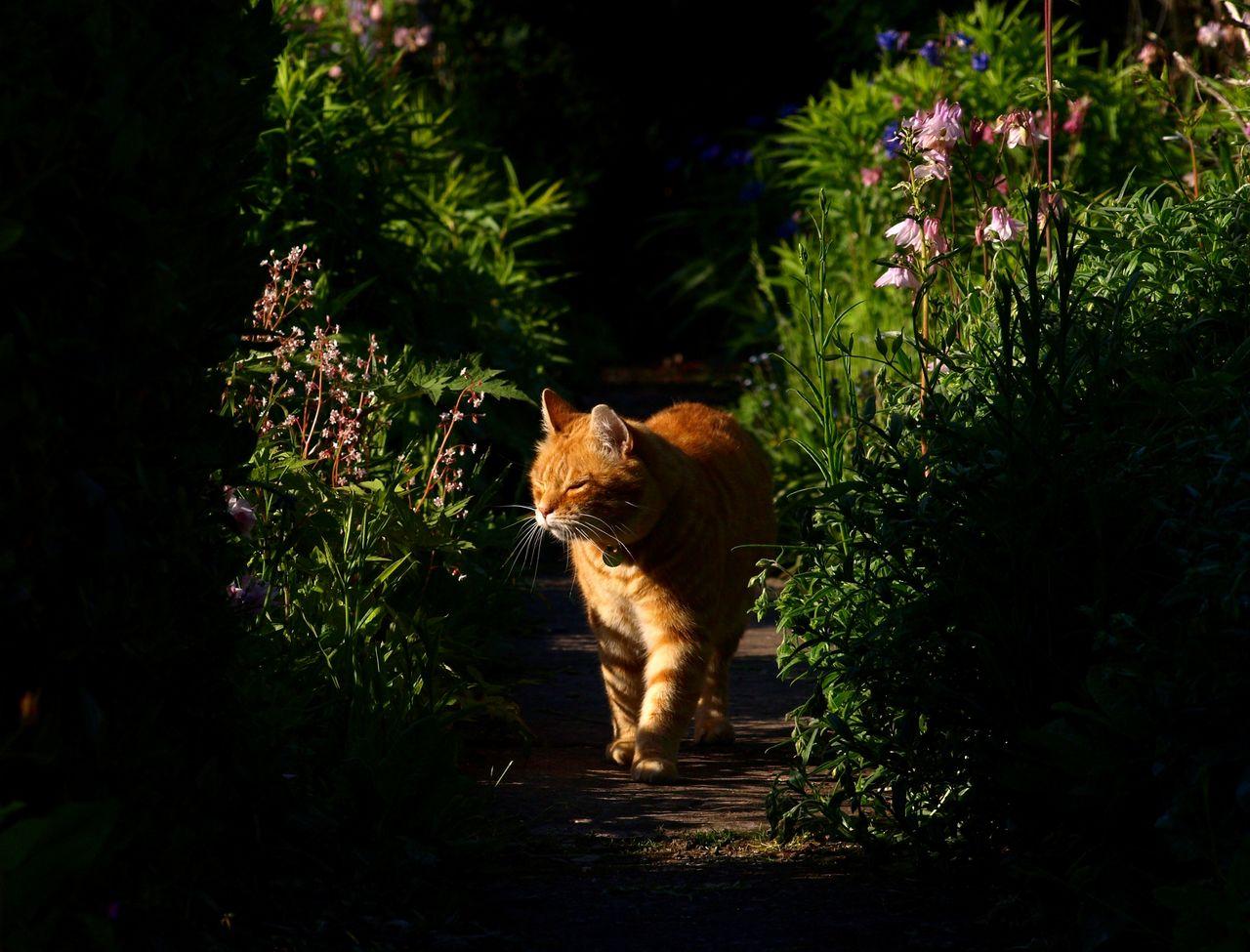 Ginger Cat Walking Amidst Plants At Park