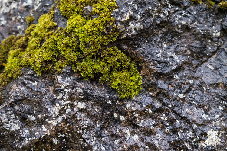 Close-up of moss on rock