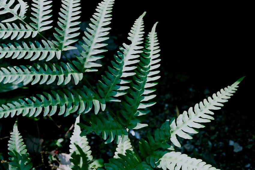 Plant Growth Leaf Plant Part Green Color Nature Fern