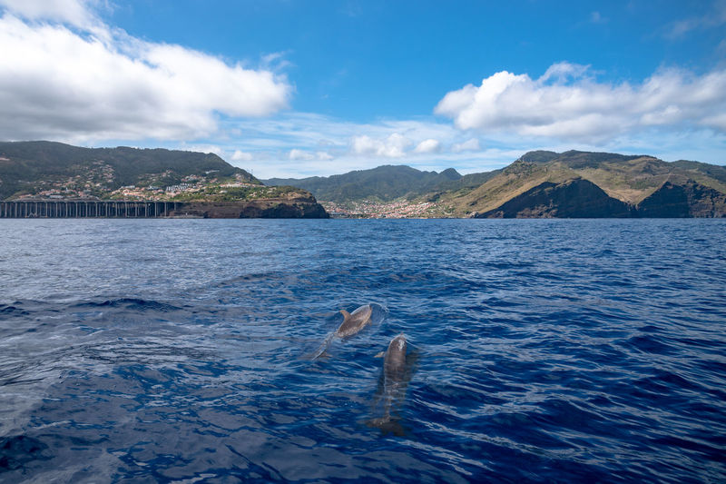 View of dolphins in sea