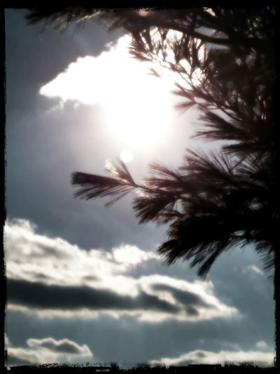 Todays Weather Report From My Point Of View Creative Photography From My Lens Gods Beauty No Edit No Fun This Is My Art!!! Sunshine My Cloud Obsession ☁ Pine Needles My Perspective Sky Porn My Eye To The Sky Look Up And See Beauty Look Up⬆