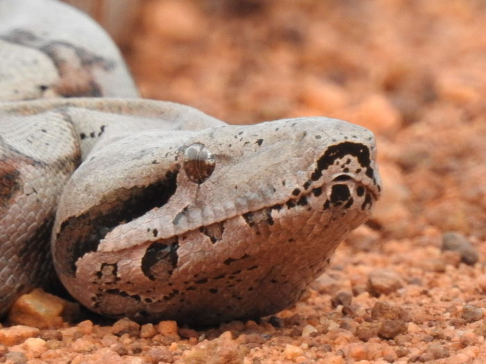 Reptile Desert