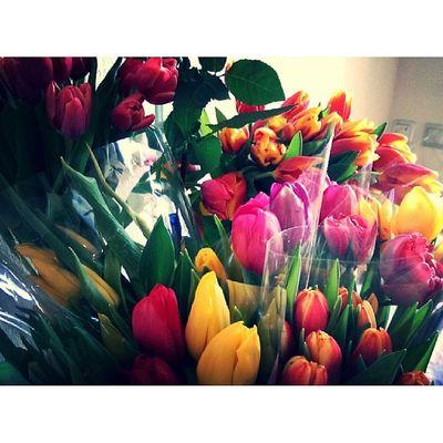 Восьмимартовский спам восьмоемарта женскийдень Тюльпаны цветы праздник