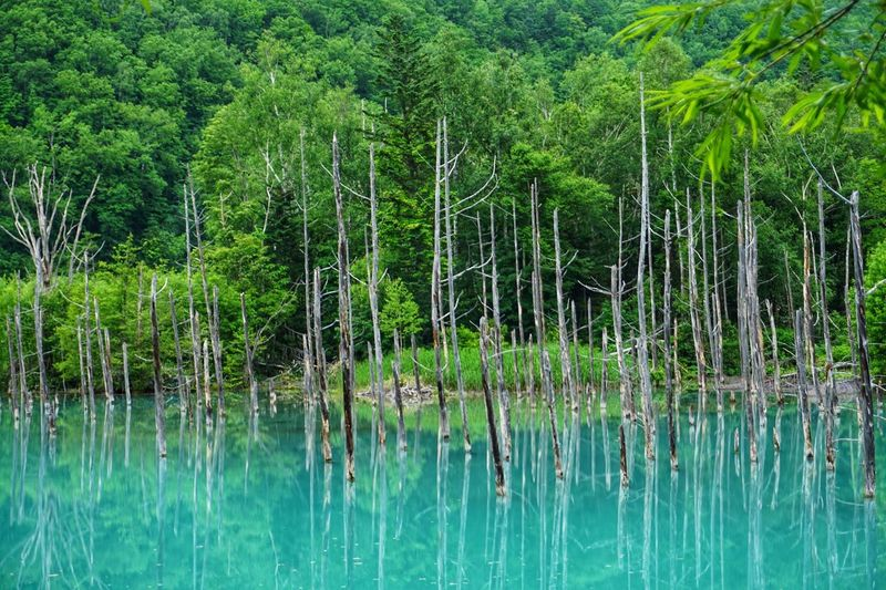Blue Plant Tree Growth Water Tranquility Lake Nature Reflection Forest