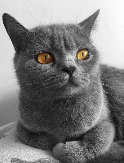 Cat Pets Cat