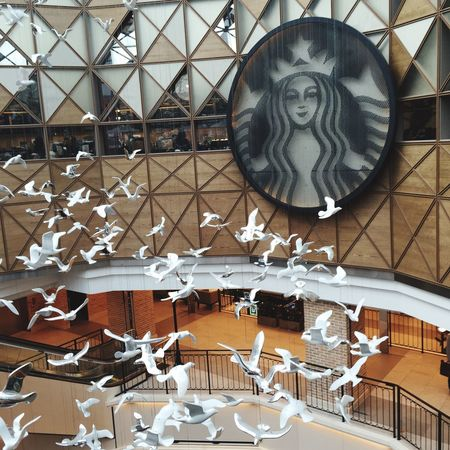 둘기벅스🐦☕️ Starbucks Coffee Cafe Seoul