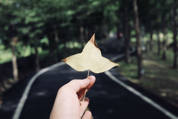 Cropped Image Of Hand Holding Dry Leaf Against Road