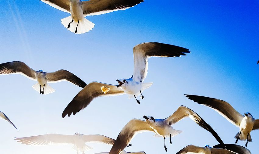 Our friends at the beach Flying Blue Animal Wildlife Bird Spread Wings Flock Of Birds Sky Day Outdoors Seagulls In Flight Seagull Hungry