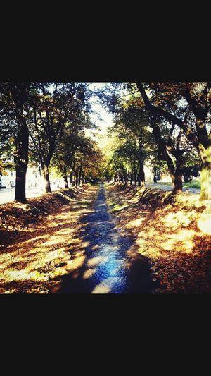 Tek u jesen otkriju se boje krosanja.... Sve su slicne u leto, zelne... Naposletku...