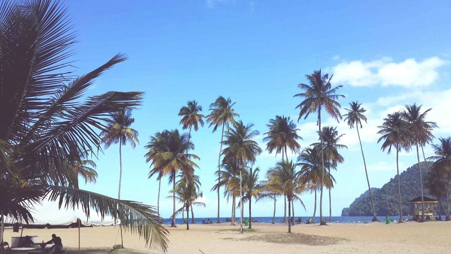 Beach Coconut Trees Nature Sand Sea Sky Beauty In Nature Scenics Tranquility Tropical Paradise Outdoors Day Relaxing In The Sun EyeEmNewHere Swaying In The Wind Takemeback Beach Day Beachscape Blue Sky White Clouds The Great Outdoors - 2017 EyeEm Awards