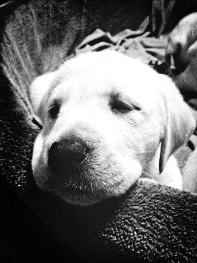 I Love My Dog Puppy Hello World Cheese!