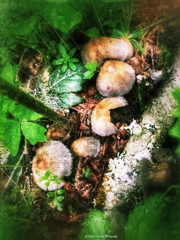 Shroom Group Mushrooms Mushroom Fungi No People Day Nature Water Close-up Full Frame Animal Green Color Plant Plant Part Outdoors
