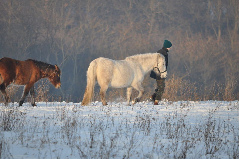 Animal Themes Beauty In Nature Cold Temperature Domestic Animals Mammal Nature Outdoors Snow Winter