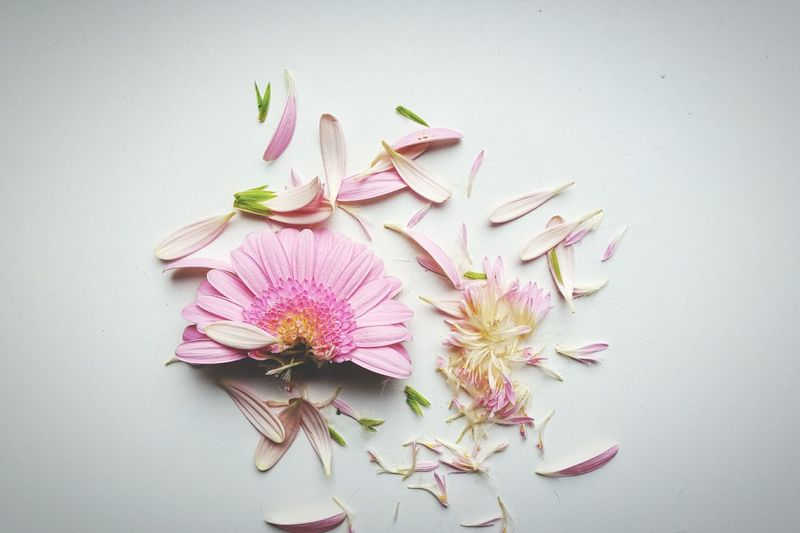 High angle view of scattered flower on white background