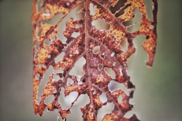 Close-up Focus On Foreground No People Rusty Plant Nature Selective Focus Freshness Indoors  Brown Metal Fragility Growth Food Pattern Day Beauty In Nature Vulnerability  Flowering Plant Damaged Moldy Rusts Blotches Wilting Pests