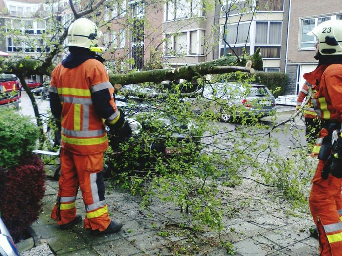 Chance Encounters Fireman Tree Car Orange Color