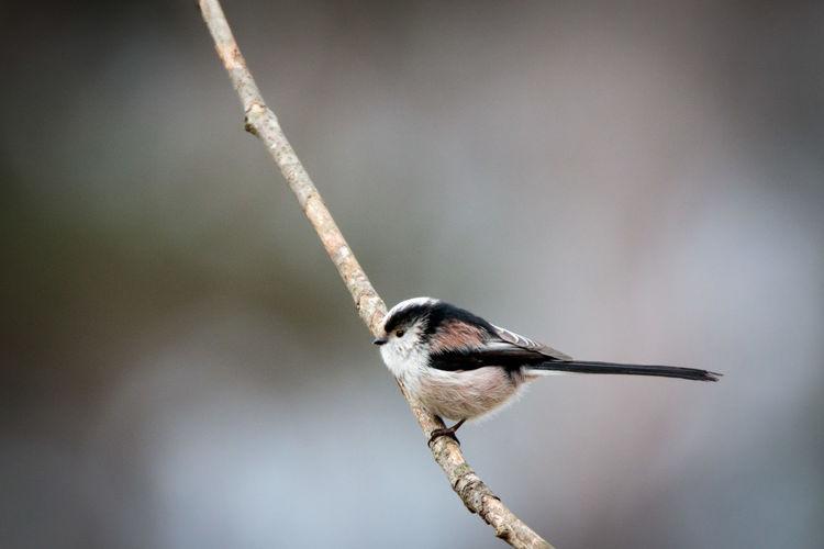 Bird Perching On Twig