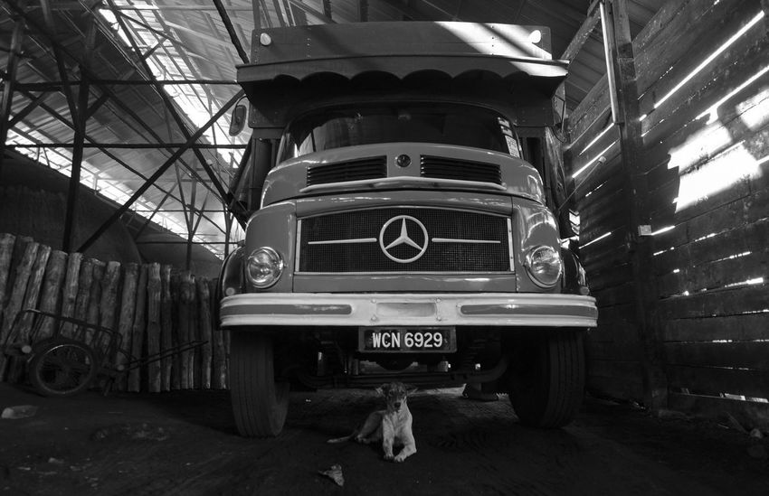 Black And White Friday Charcoal Dog Factory Building Land Vehicle No People Transportation Be. Ready. EyeEmNewHere