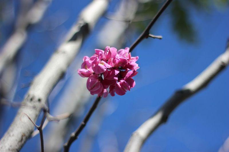 Blue Wave Flower Blue Sky Blue