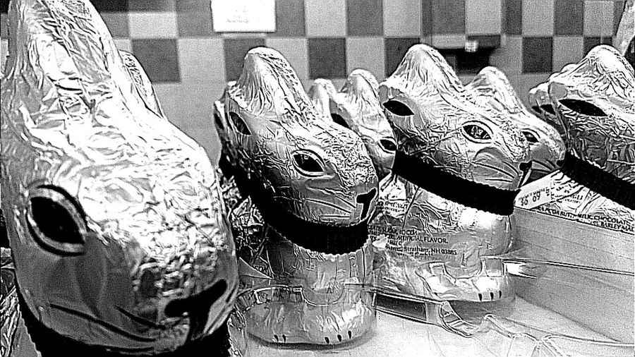 March of the Bunnies.photo by Shell Sheddy Shellsheddyphotography Sheshephoto Street Streetphotography Bnw Bnw_collection Bnw_friday_eyeemchallenge Bnw_captures Bnwphotography Bnw_life Bnwmood Bunny 🐰 Documentary Photography Photo Journalism Bunny  Arts Culture And Entertainment Close-up