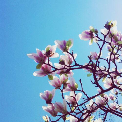 Spring Flowers. Spring Flowers Sky Summer