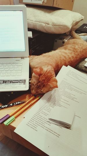 Final Exams Helper Cat Kitty Love ♥
