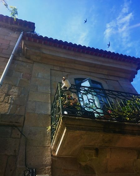 Built Structure Architecture Building Exterior Low Angle View Sky Railing Flying Cloud - Sky History Day Blue Outdoors Historic Building No People First Eyeem Photo Cats Cat Gatos En La Ventana Gato Pontevedra Galicia,España Pontevedra