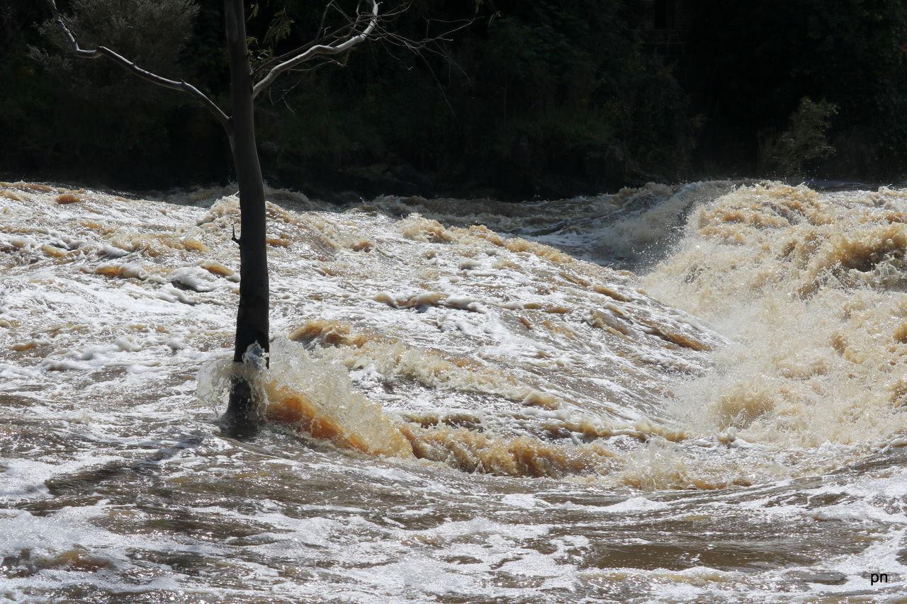 Water Flowing On Tree