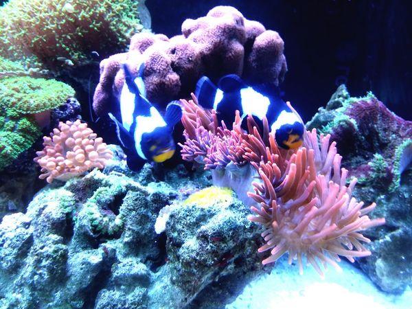 Nemo Spawning Fishtank Coral Reefs Seafish Animal Lover By Lg G3
