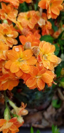 Flower Leaf Water Tree Orange Color Close-up Plant
