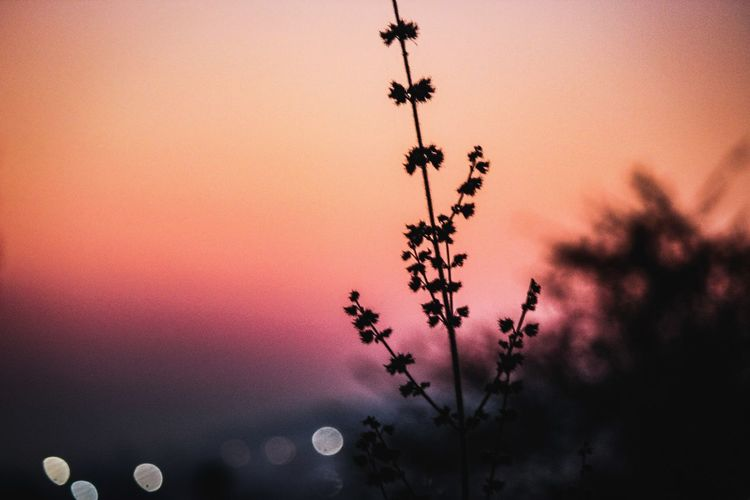 Low angle view of flowering plant against sky at sunset