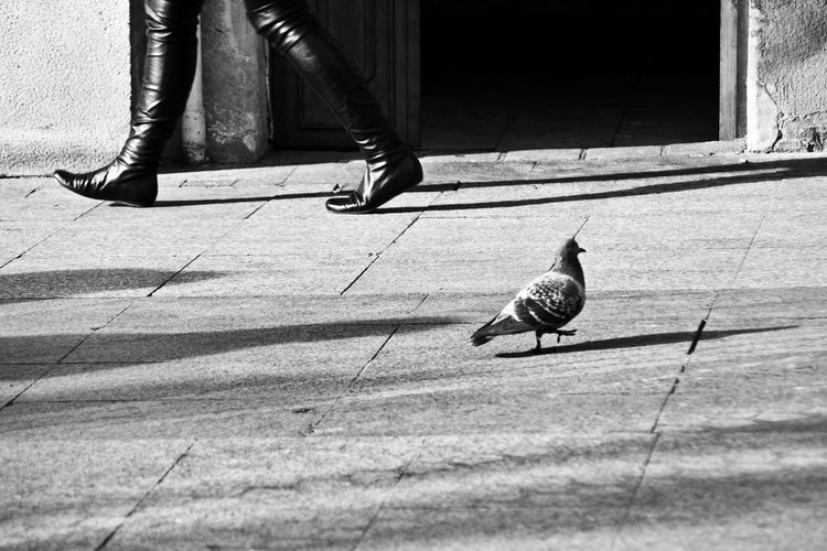 City Composition Lines Walk Bird Black Human Body Part Legs Low Section People Pigeon Shadows Shoes Street Streetphotography Walking