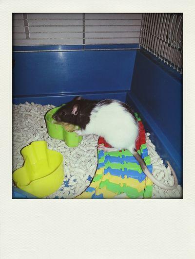 Min fina Lilla My ♡ First Eyeem Photo Rat