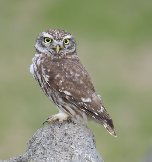 Close-up of owl perching outdoors