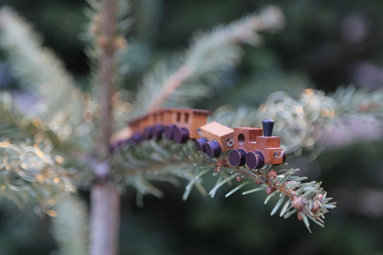 Branch Close-up Day Focus On Foreground Growth Needle Express No People On The Edge Toy Toy Train Wooden Toy Wooden Toy Train Wooden Train