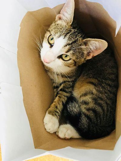 Lovecats Cats Of EyeEm Cat♡ Cat Lovers Cat Feline Animal Mammal Domestic Cat One Animal Animal Themes