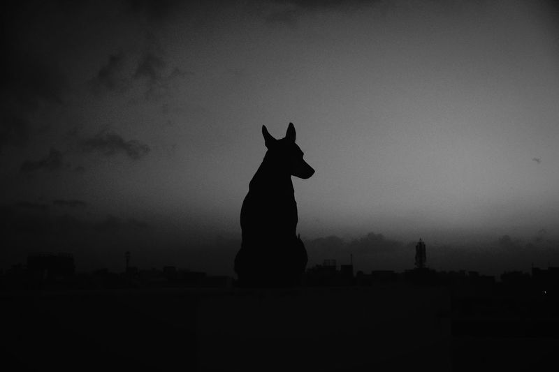 Silhouette Dog On Field Against Sky During Night