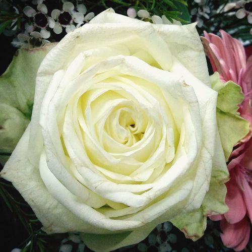 Flores de boda... (De iPhone).