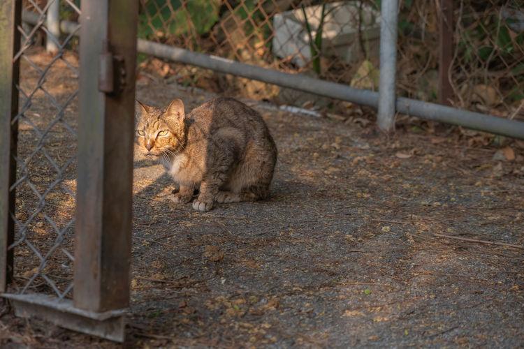 Cat sitting on a field