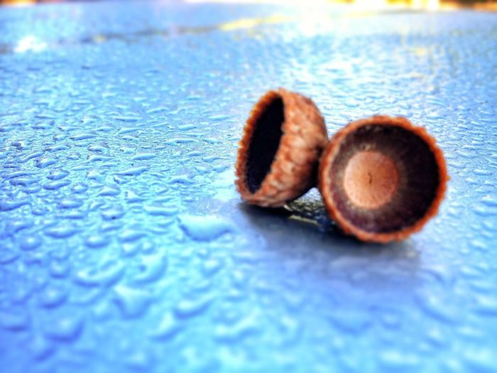 Acorn Water Droplets Raindrops Rain