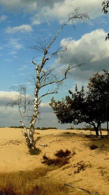 Tree Bare Tree Branch Sand Dead Tree Sky Landscape