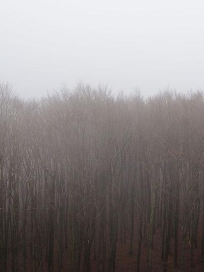 The Wienerwald around Vienna in autumn. Autumn Autumn colors The Great Outdoors - 2018 EyeEm Awards Trees Winter Winter Colors Foggy Foggy Trees Forest Forest In Winter Trees In Winter Woods Woods In Fog Woods In Winter