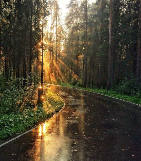 парк Закат последождя асфальт ижевск Izhevsk Дорога