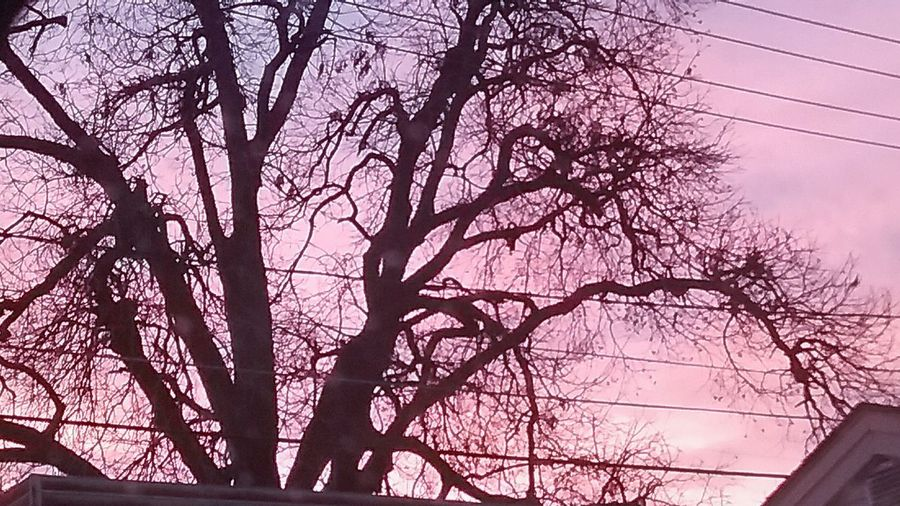 Cold Oklahoma Sky Tree Nature Branch Sky No People Beauty In Nature Outdoors Bare Tree Cold Morning Pecan Tree Old Tree🌳 Old Pecan Tree